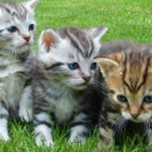 Pet Care Provider Kittys R Us P's Profile Picture