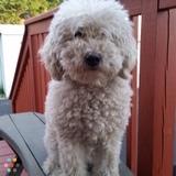 Dog Walker, Pet Sitter in West Paterson