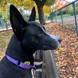 Sweetest doggo needs help with her anxiety
