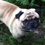 Cornwall Pet Services; friendly, reliable and responsible! Offering Sitting/Walking/Feeding/Training/Grooming