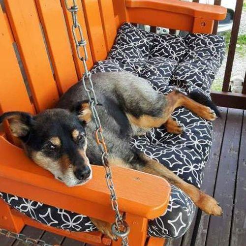 Pet Care Provider Nicole C Gallery Image 1