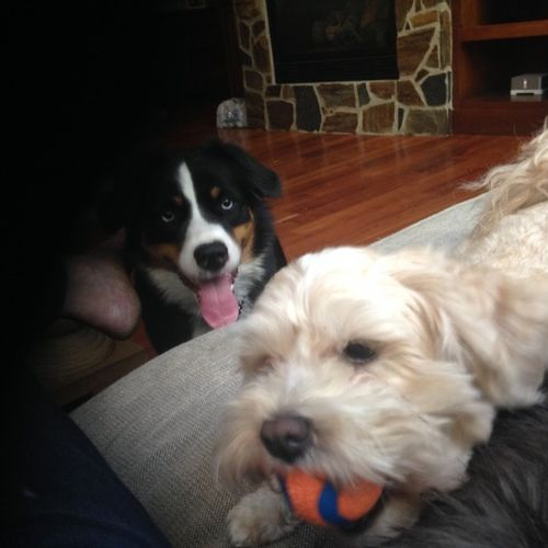 Pet Care Provider Darcie Burtis's Profile Picture
