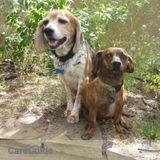 Dog Walker Job, Pet Sitter Job in Santa Fe