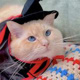 Hollister Pet Sitter Seeking Job Opportunities