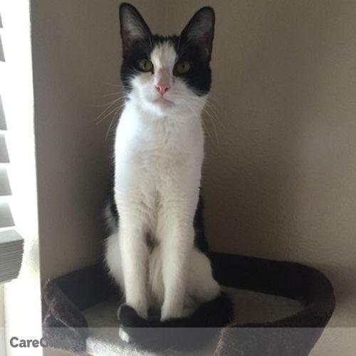 Pet Care Job Gabriella E's Profile Picture