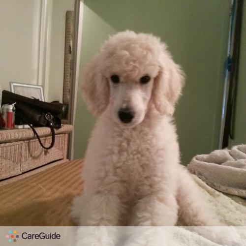 Pet Care Job Amneris Otero's Profile Picture