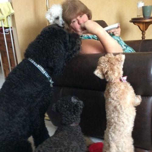 Pet Care Provider Deborah T Gallery Image 2