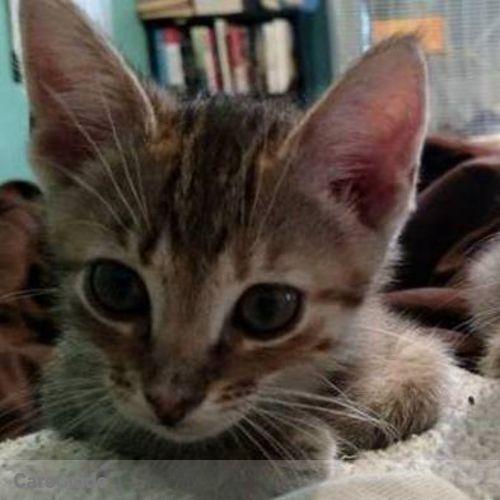 Pet Care Provider Kathryn L's Profile Picture