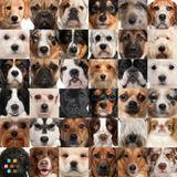 Dog Walker, Pet Sitter in Halifax