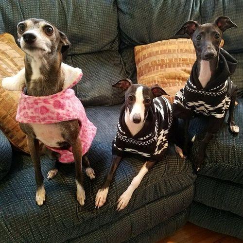 Pet Care Job Nancy Angelini's Profile Picture