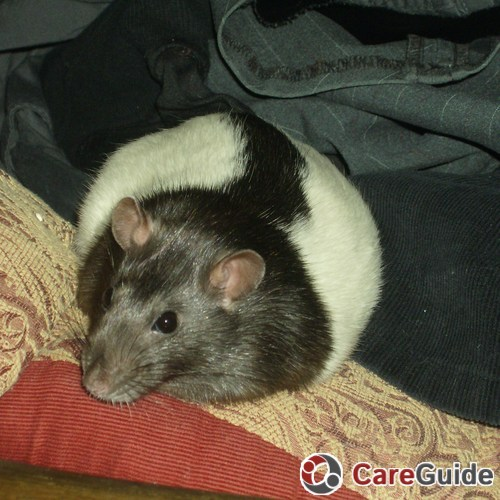 Pet Care Job Lynea B.'s Profile Picture