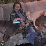 Pet Sitter in Angola