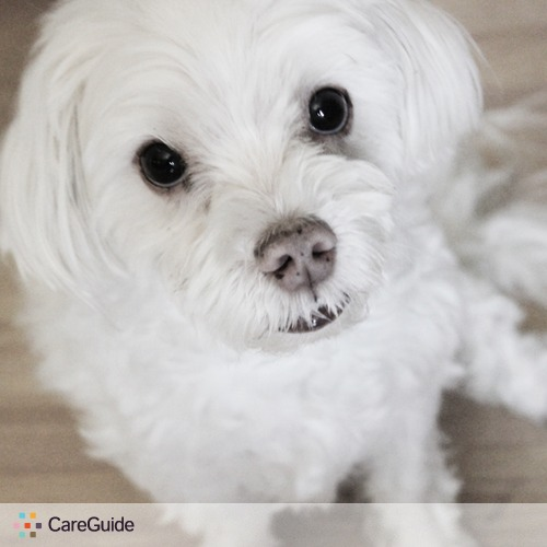 Pet Care Provider Lexi lawton's Profile Picture