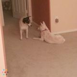 Dog Walker, Pet Sitter in Casa Grande