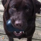 Dog Walker, Pet Sitter in Cincinnati