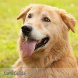 Dog Walker Job, Pet Sitter Job in Mason