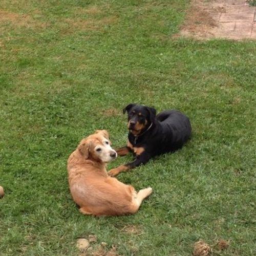 Pet Care Provider Wendi G Gallery Image 1