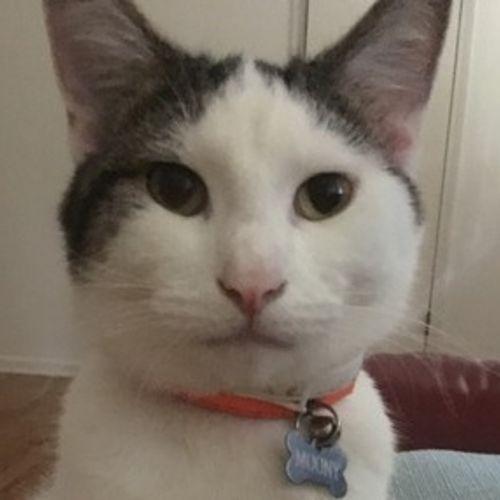 Pet Care Job Veronika Y's Profile Picture