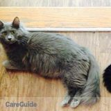 Need Cat sitter for 2 sweet cats please call for dates. They are people oriented and very sweet.