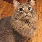 Pet Sitting Wanted in Morgantown