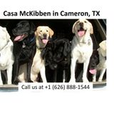 Casa McKibben - Superb Cage-Free, In-Home Boarding - Cameron, Texas
