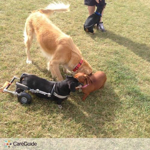 Pet Care Provider Brook Paige's Profile Picture