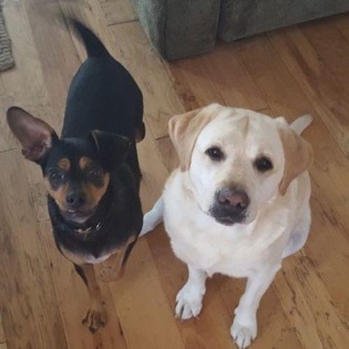 Pet Care Provider Sandy Devine Gallery Image 1