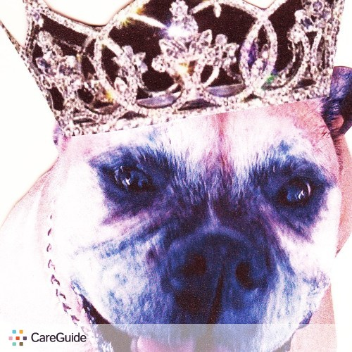 Pet Care Provider Kelsey Queen of Paws Dog Walking's Profile Picture