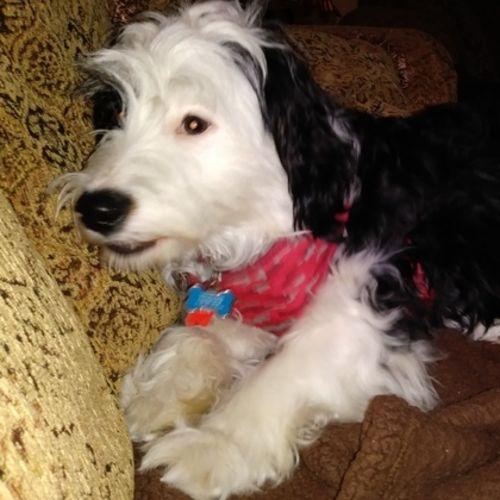 Pet Care Provider Lori Adimey Gallery Image 2
