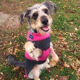 Toronto, ON Pet Sitter, Experienced Animal Shelter Volunteer