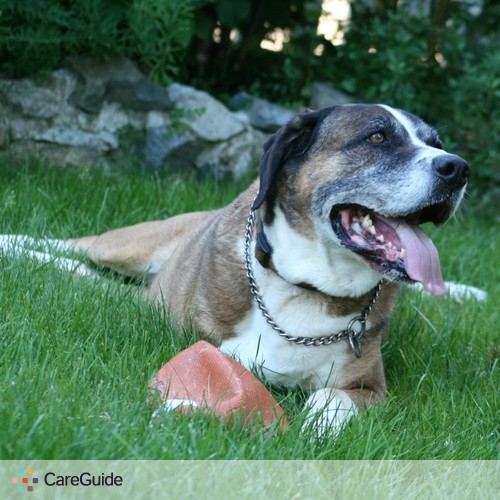 Experienced TLC for Senior Dogs