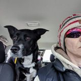 For Hire:In Winnipeg - Animal Lover with over 30 years experience and foster to over 27 pups.