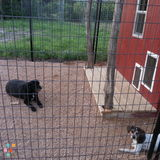 Pet Sitter, Kennel in Moody