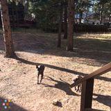 Dog Walker, Pet Sitter in Woodland Park
