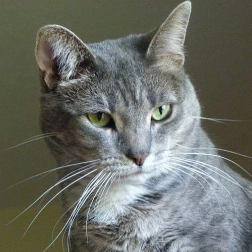 Pet Care Provider Renee M's Profile Picture