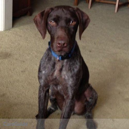 Pet Care Job Sandy N's Profile Picture