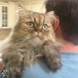 Pet Sitter Job in New Richmond