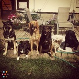 Dog Walker, Pet Sitter, Kennel in Calgary