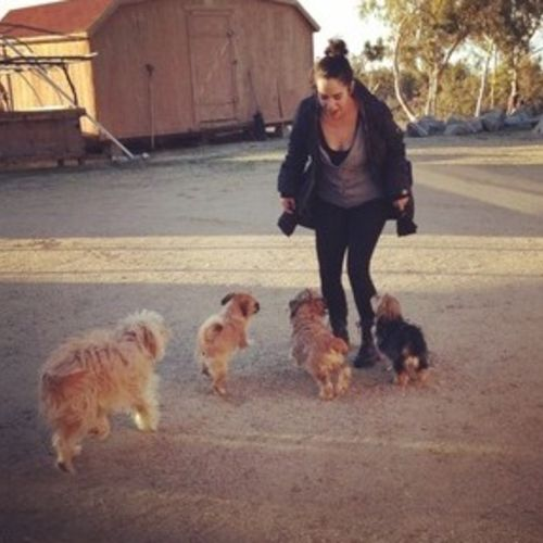 House Sitter Provider Melissa Osoria Gallery Image 2