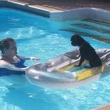Talented Animal Caregiver in Pensacola