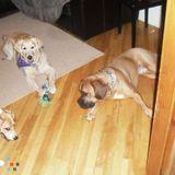 Dog Walker, Pet Sitter in Montreal