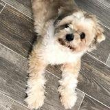 Honest Pet Carer in Bridge City, Beaumont, Nederland, Orange, and Port Arthur