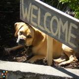 Dog Sitter Needed Dec 2 to Feb 26