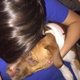 I am miranda from kent ny i love all dogs i would be a great fit for a furry friend.