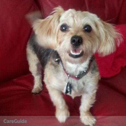 Pet Care Provider Lea Ann P's Profile Picture