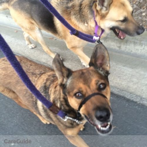 Pet Care Provider Cortney M's Profile Picture