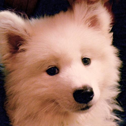 Pet Care Provider wallis z's Profile Picture