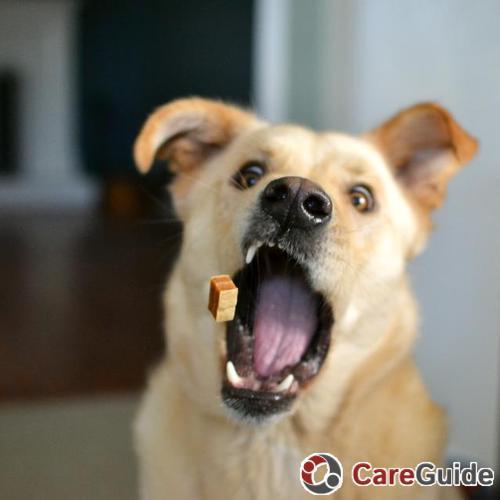 Pet Care Job Linley W's Profile Picture