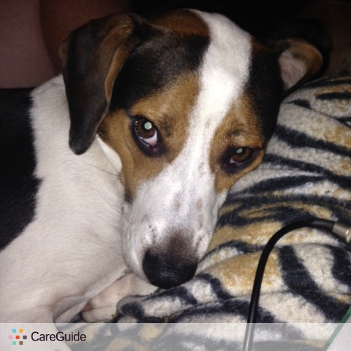 Pet Care Job Katie Silvestri's Profile Picture