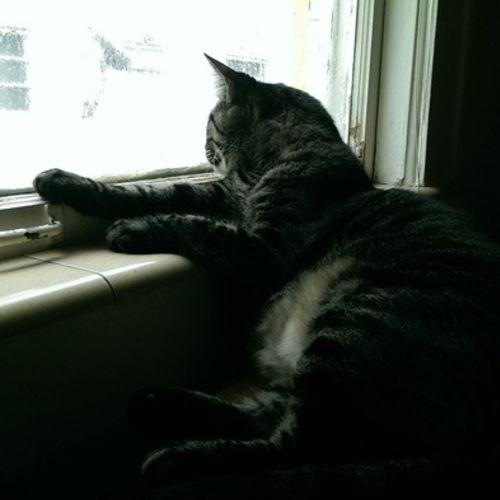 Pet Care Job Zoila Almeida's Profile Picture